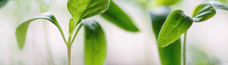 genrebild på planta